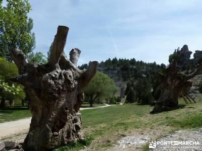 Cañón del Río Lobos  [Día de San Isidro] sierra de madrid tiempo guia senderismo ruta en madrid